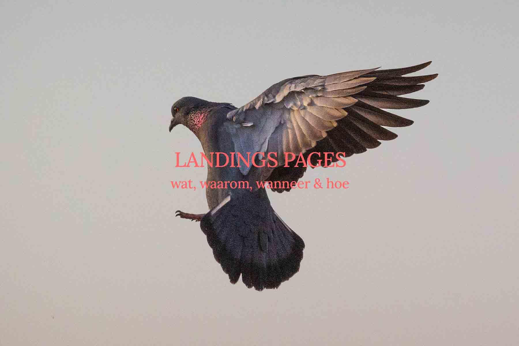 """Featured image for """"Wat is een landings pagina"""""""